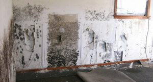 Dangers of Mold in Homes