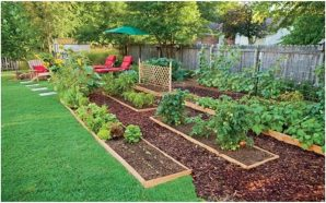 Use Edible Landscaping