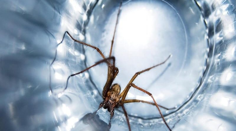 HOW TO KEEP SPIDERS AWAY FROM YOUR HOME-min (1)